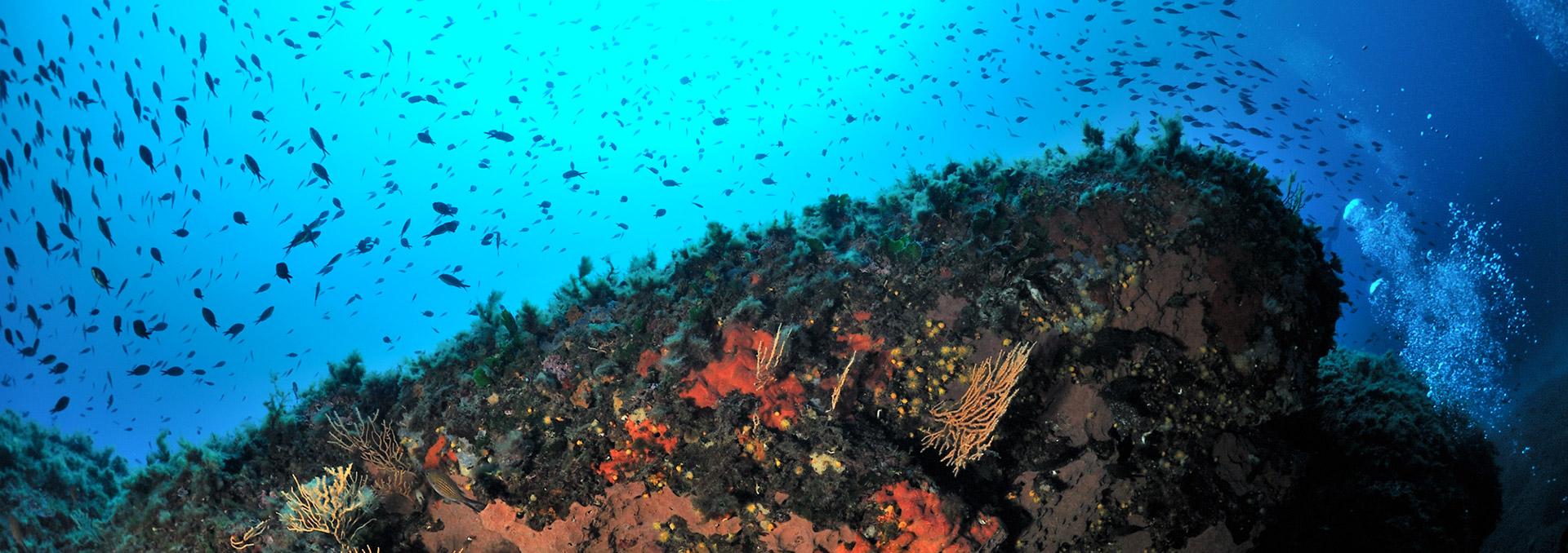 percorsi-subacquei-porticello
